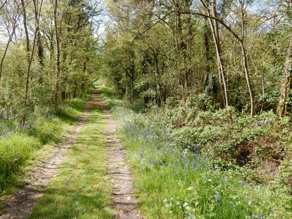Chemin de St Jacques près de Marboué en Eure-et-Loir