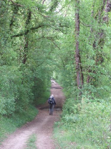 Randonneur sur un chemin de terre dans une forêt